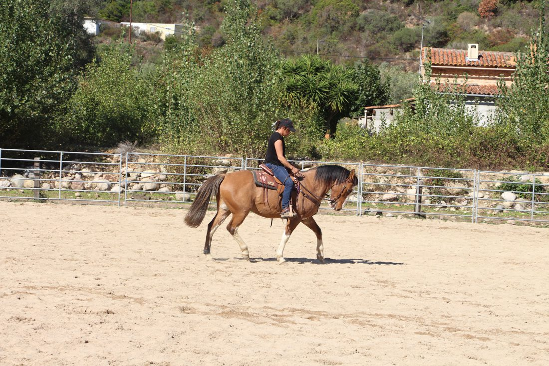 cours-equitation-western